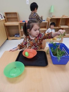 Stepping Stone Montessori School Gardening